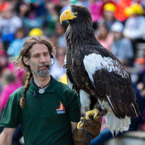 Cuidador con ave rapaz en su brazo en el Show de Rapaces.