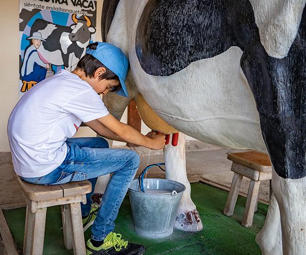 Niño ordeñando la vaca.