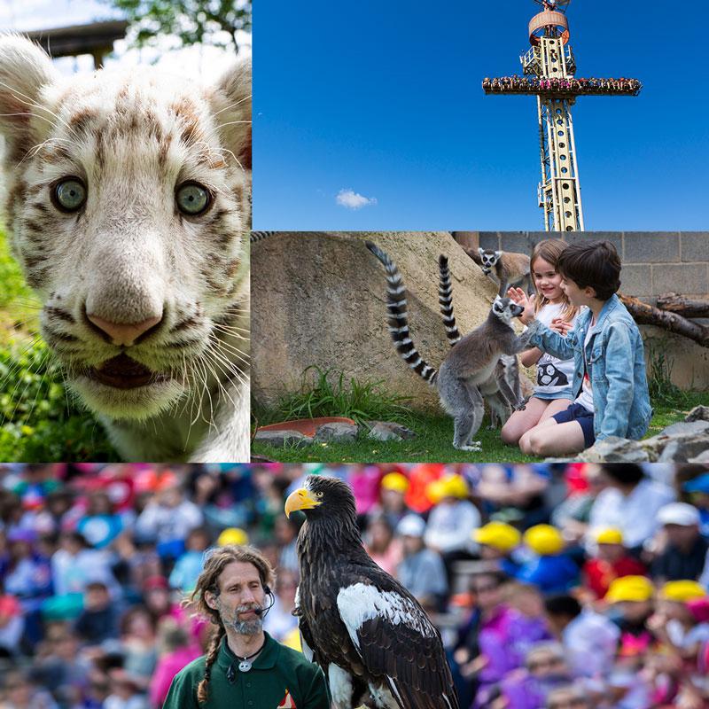 Parkeko irudien collage-a: Albino tigre kumea, Free Fall erakarpena, Lemurrekin jolasean ari diren umeak eta arreta besoan zaintzailea.